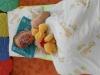 SPOLEČNÉ/ Ukončení školního roku - rozloučení s předškoláky 21.6.2012